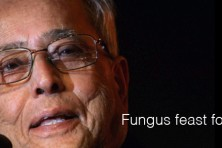 Fungus feast for President