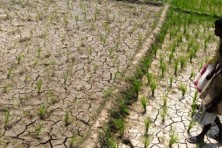Drought looming over Trivandrum