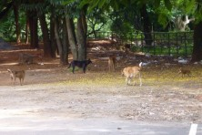 21 Commandos to control the Stray dog menace in Trivandrum City
