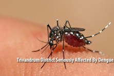 Trivandrum District Seriously Affected By Dengue Fever!