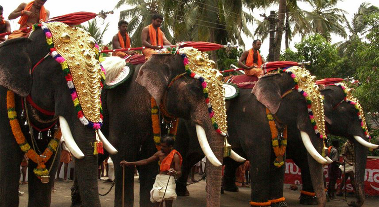 Hire forest department elephants for Rs 12,000