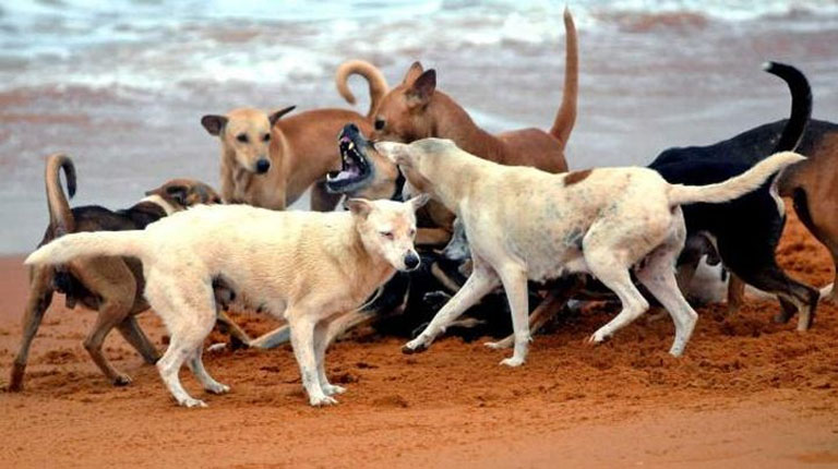 Kerala To Strengthen Steps Against stray Dog Menace!