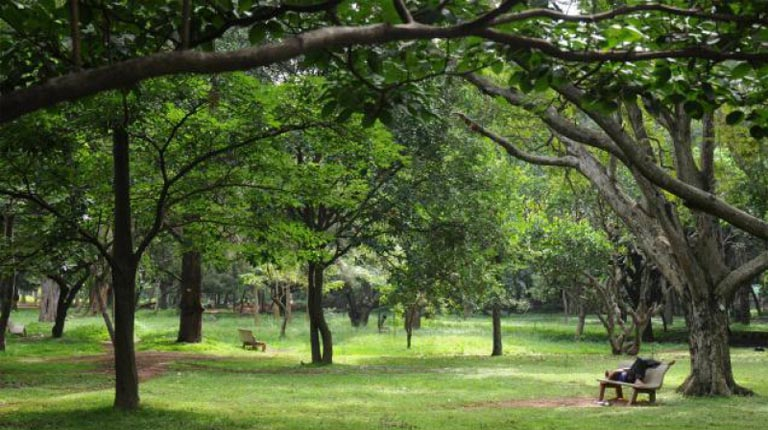 Attingal Is Going To Plant 10,000 Tree Saplings To Increase Green Cover!